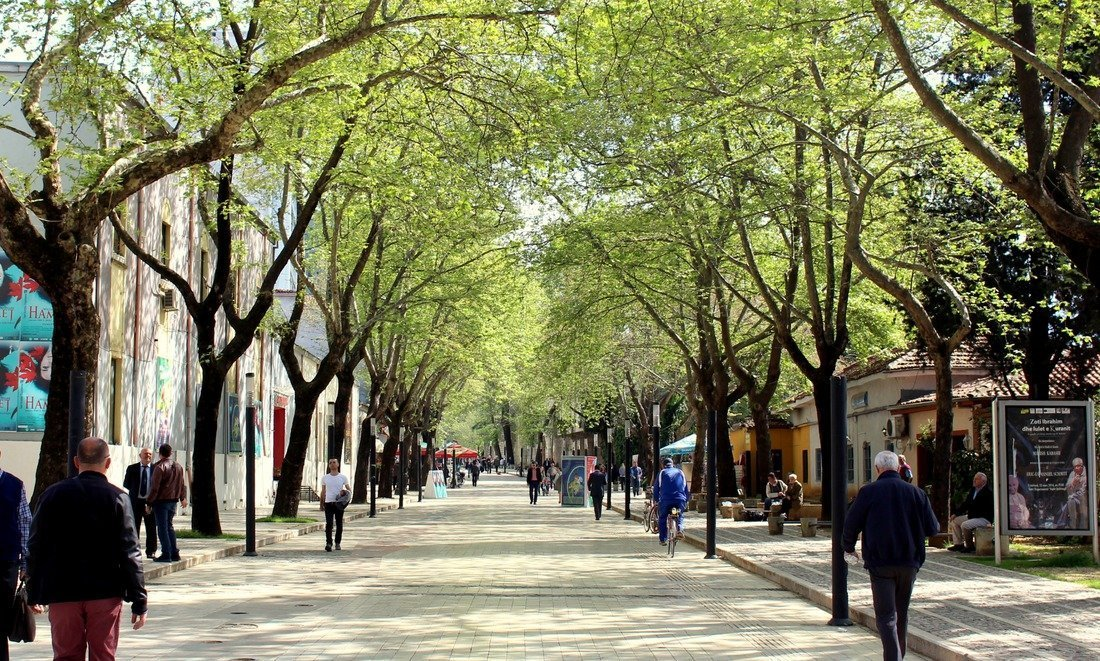 A quiet road lined with trees in Tirana