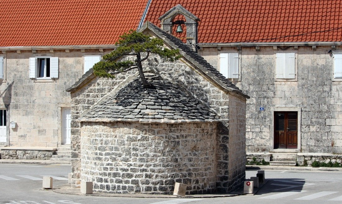 A chaple with a tree growing out of it in the town of Nerežišća - Day trip to Brač