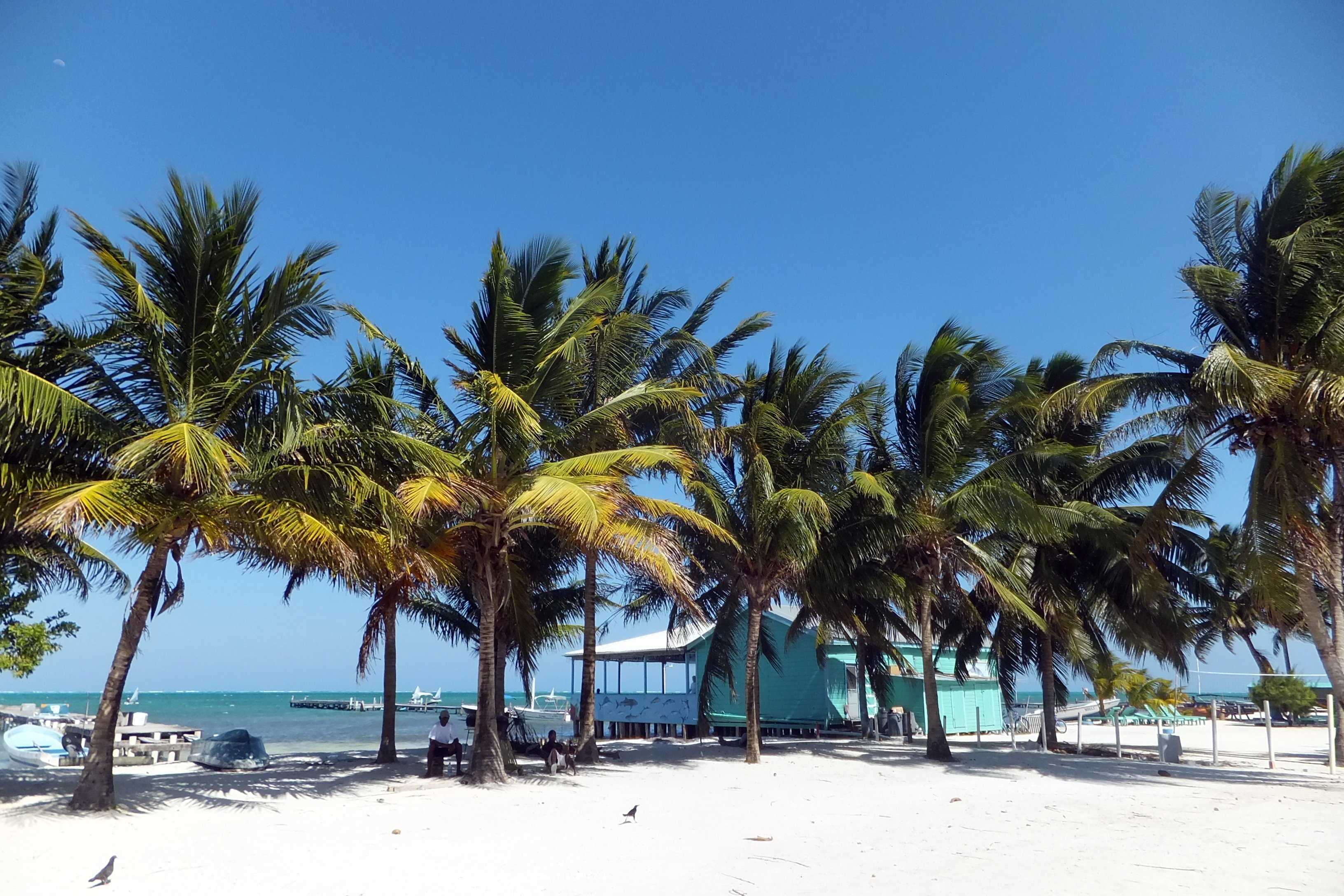 Palm trees swaying in the carribbean island of Caye Caulker - a photo blog of Belize