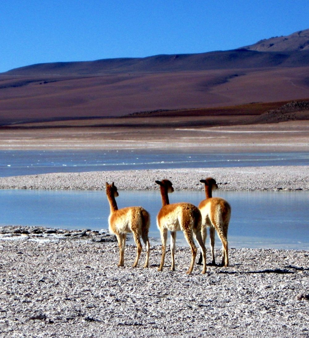 A Photo Blog of Bolivia