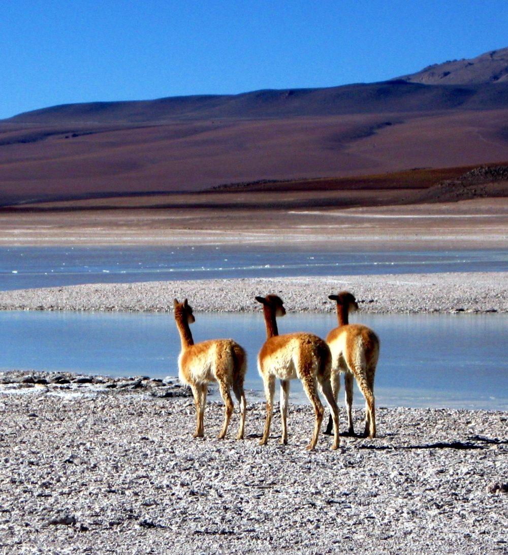 A Photo Blog of Bolivia