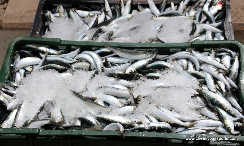 crates full of fish and ice at Split's fish market