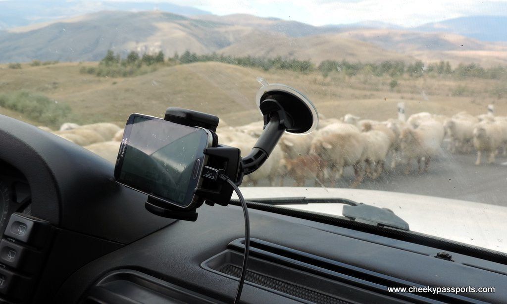 view through car windscreen showing sheep on the highway, whilst planning a road trip