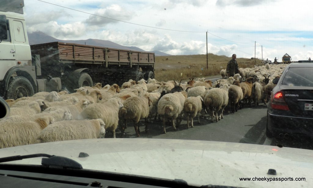 A herd of sheep take over the motorway whilst vehicles have to drive behind or around them