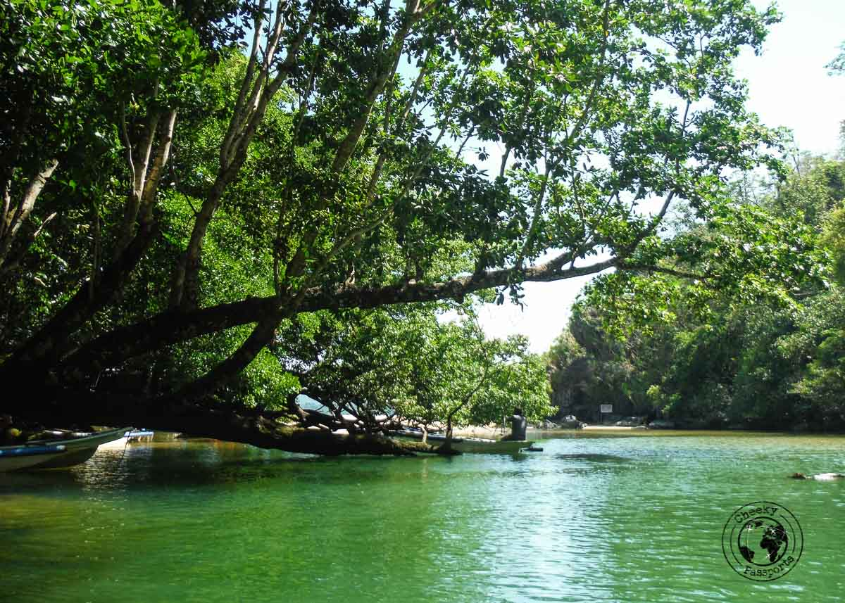 A mix of fresh and salty water at exit to the Puerto Princesa Underground River