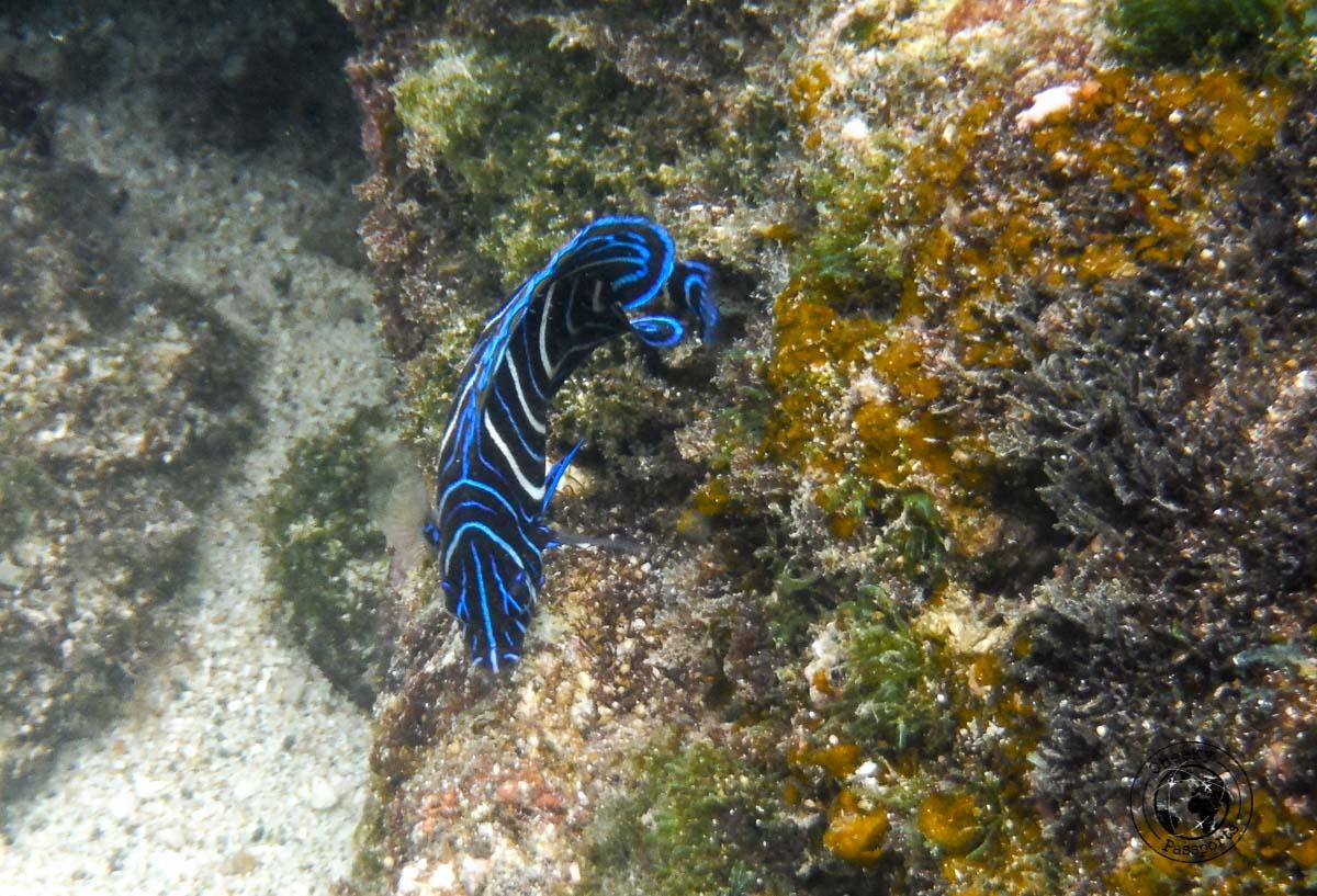 El Nido Itinerary - underwater life during El Nido boat tours