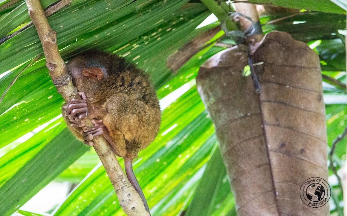 let the tarzier rest - Bohol tourist spots