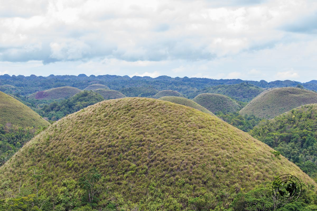 Chocolate hill in Bohol - Bohol tourist spots