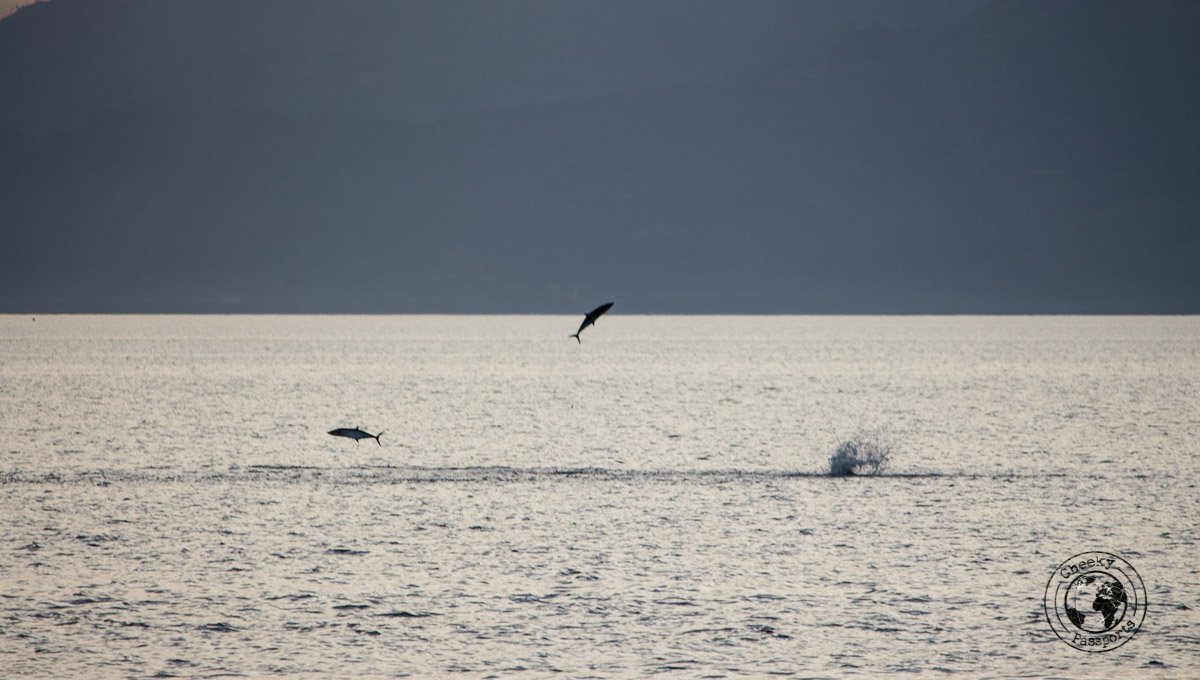 Things to do in Moalboal - big fish jumping at sunset