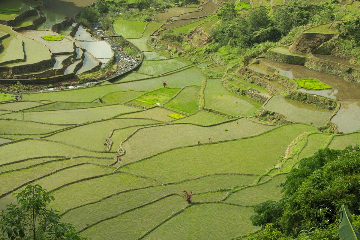 the view of the rice terraces of Banaue