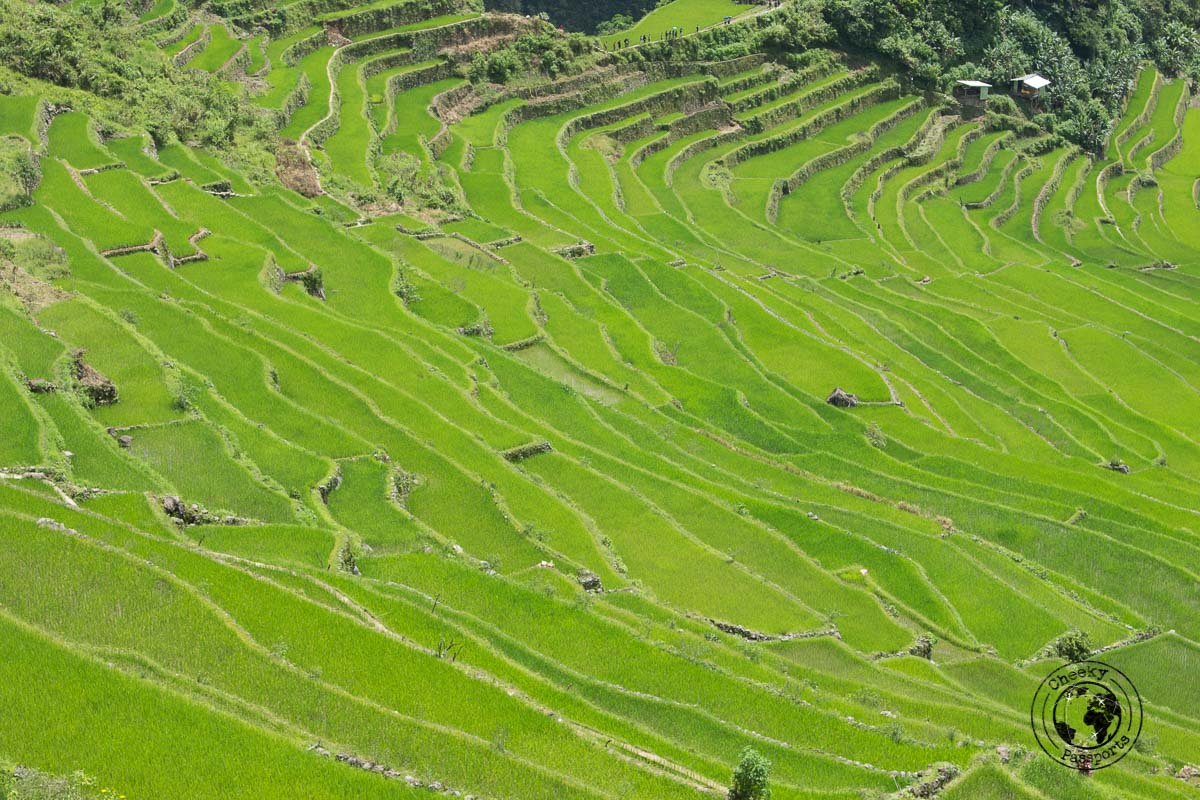 a different view of the rice terraces of Banaue and Batad