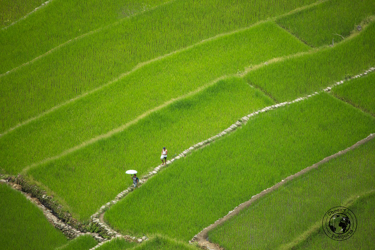 a close up of the rice terraces during our Banaue Rice Terraces Tour