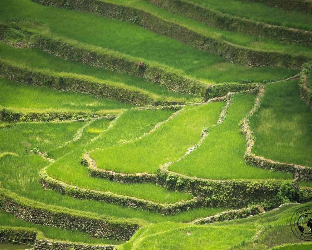 The Rice Terraces of Banaue and Batad