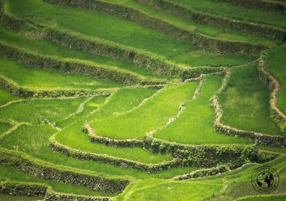 the rice terraces of Banaue and Batad