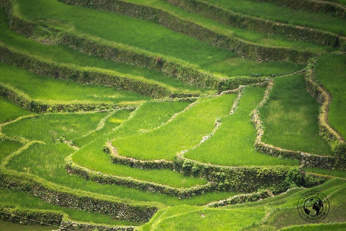 the rice terraces of Banaue and Batad - Banaue Rice Terraces Tour