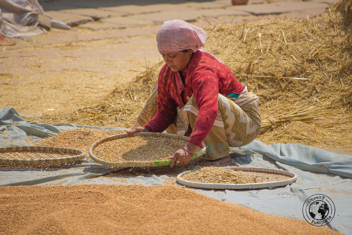 Aw woman preparing wheat at the Pottery Square at Bhaktapur Durbar Square