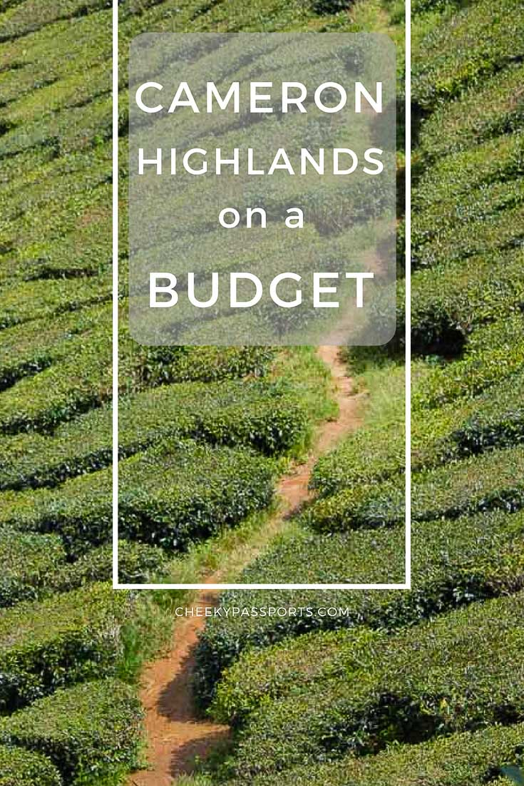 Cameron Highlands on a Budget - A Cheeky Passports Special