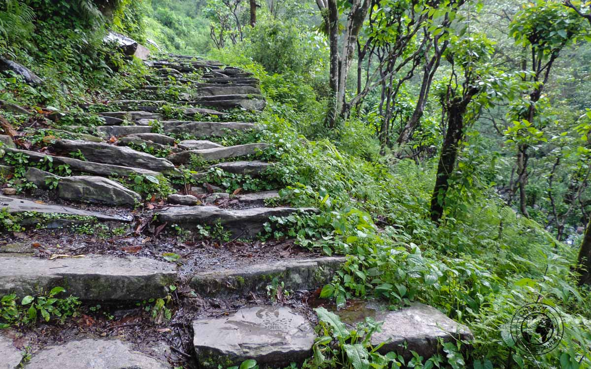 The path at the Poon hill trek, Pokhara