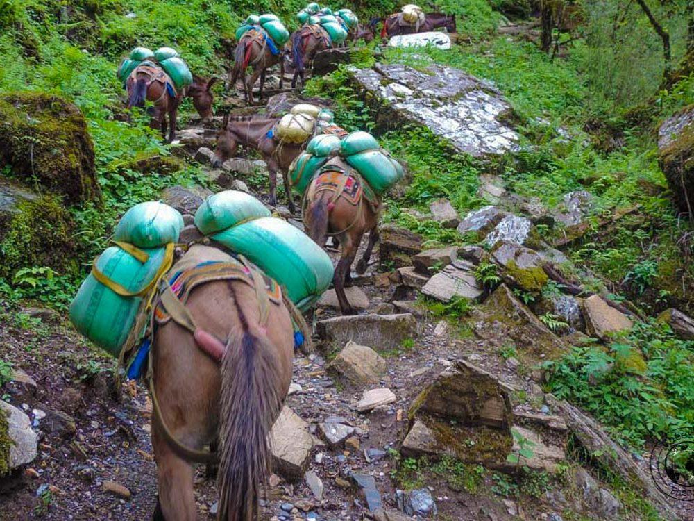The Ghorepani Poon Hill Trek in Nepal – Tips for Trekking