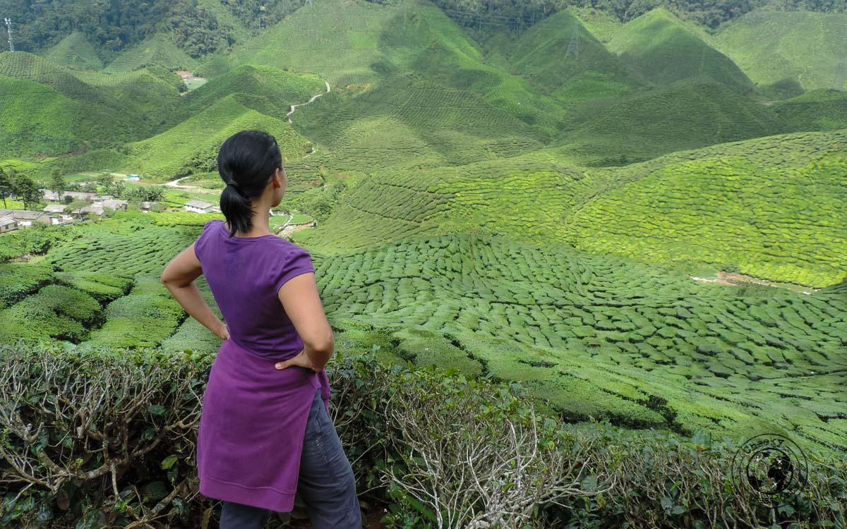 Michelle overlooking tea plantations - places to visit in Cameron Highlands on a Budget