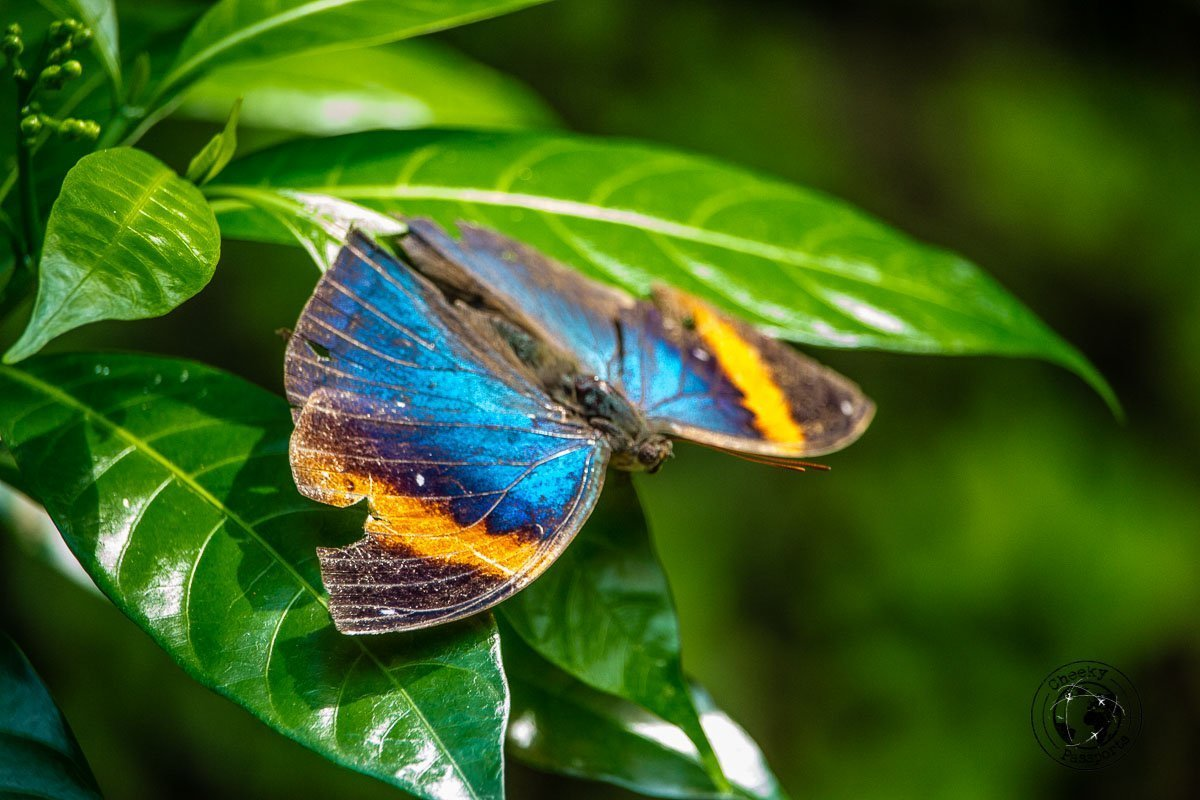 Where to stay in Malaysia -A colourful specimen at the butterfly Park Bird - Top attractions in Kuala Lumpur