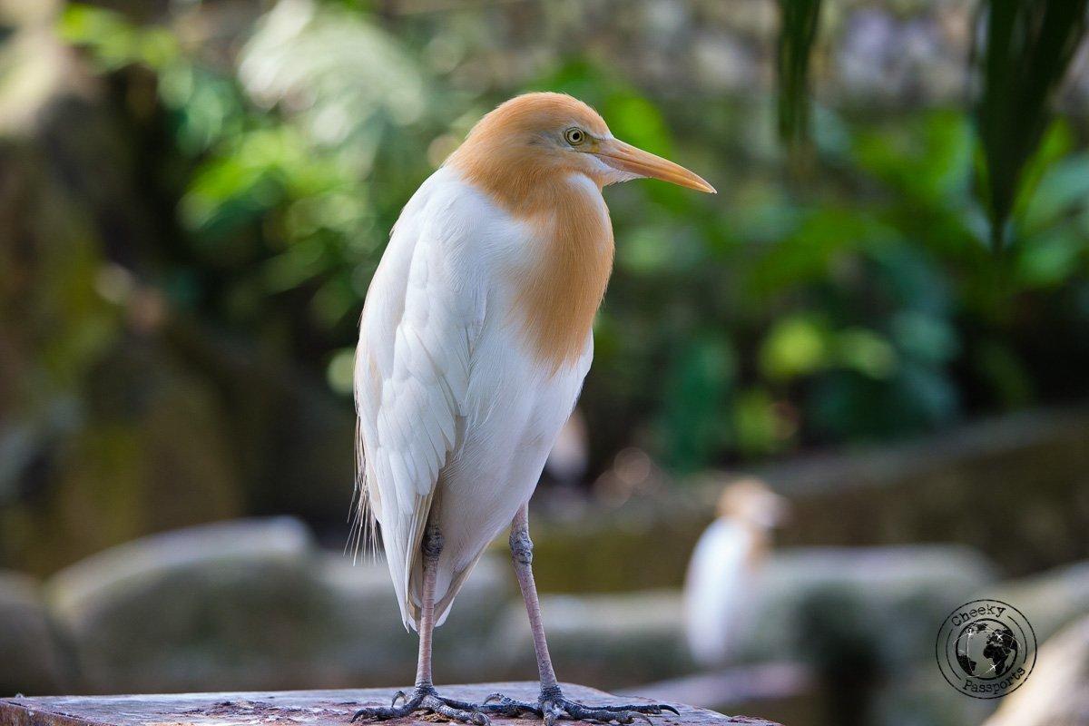 Bird posing at the Bird Park- Top tourist spots in Kuala Lumpur