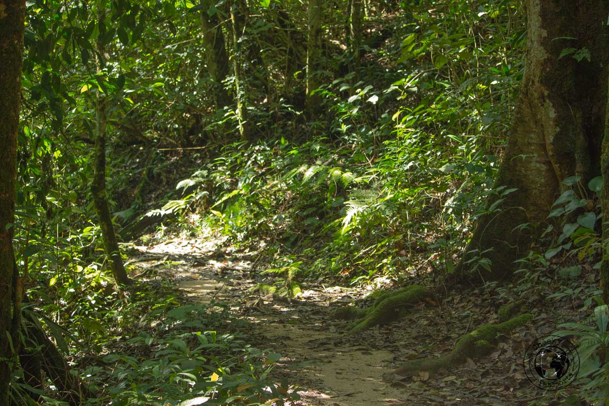 Cameron Highlands trekking - Places to visit in Cameron Highlands