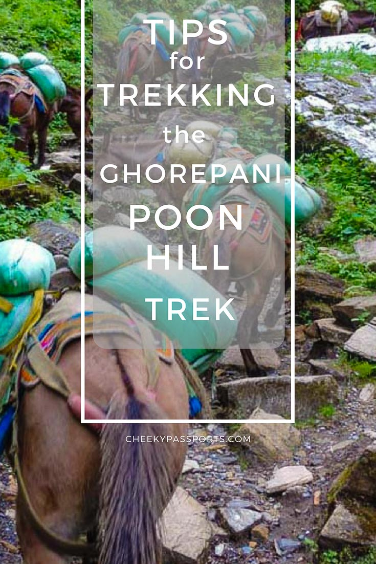 The Ghorepani Poon Hill Trek is a relatively short and easy, but nevertheless beautiful trek around the lower Annapurna region. The unfamiliarity of the route, makes planning for the trek an ordeal! Read our tips for trekking the Ghorepani Poon Hill trek in the hope that you find them helpful whilst doing your own!