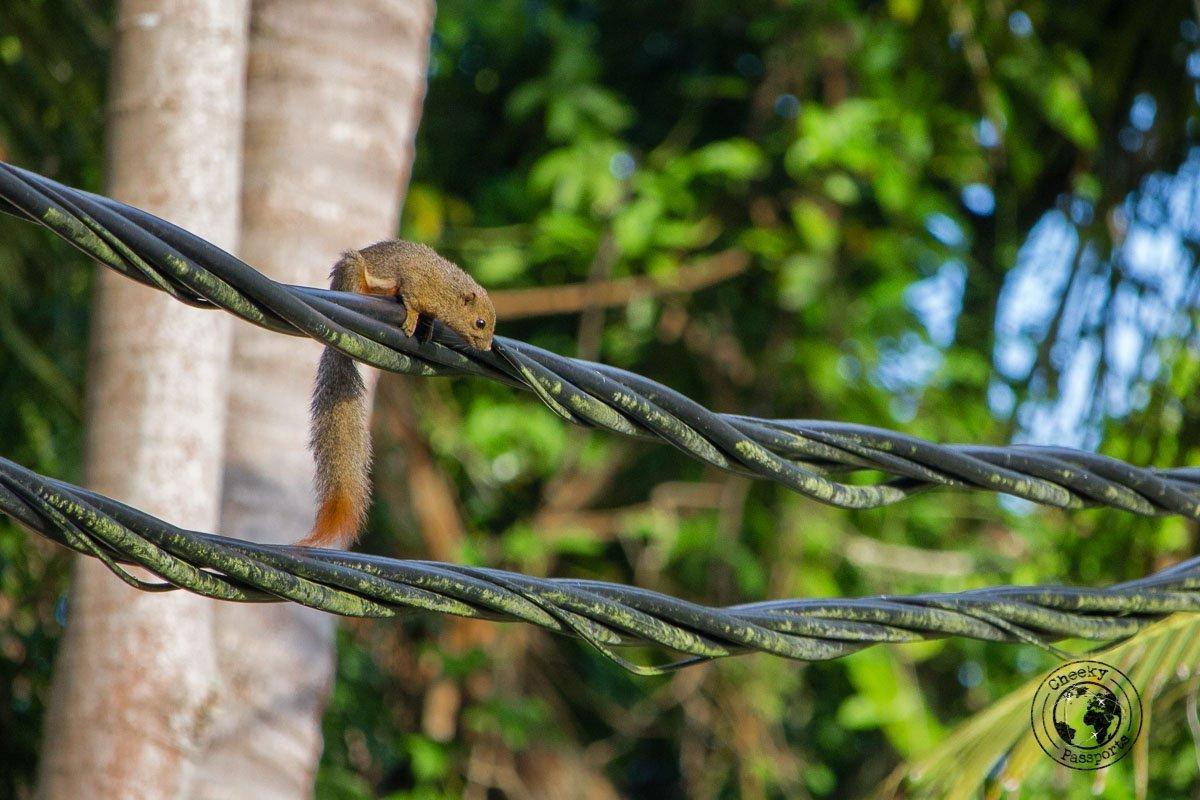 A Visitor at our resort - Kapas island, Pulau Kapas