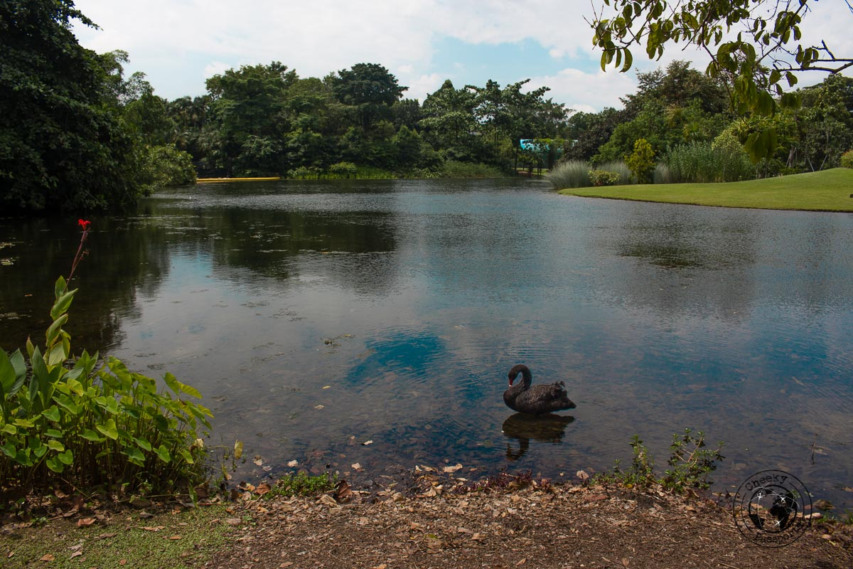 Botanic Garden - 3 days in Singapore