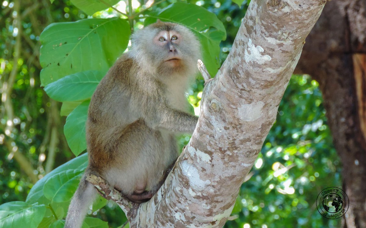 Monkey Business at the Monkey Beach Tioman - Beaches, Monkeys and Jungle treks on Tioman Island - Pulau Tioman