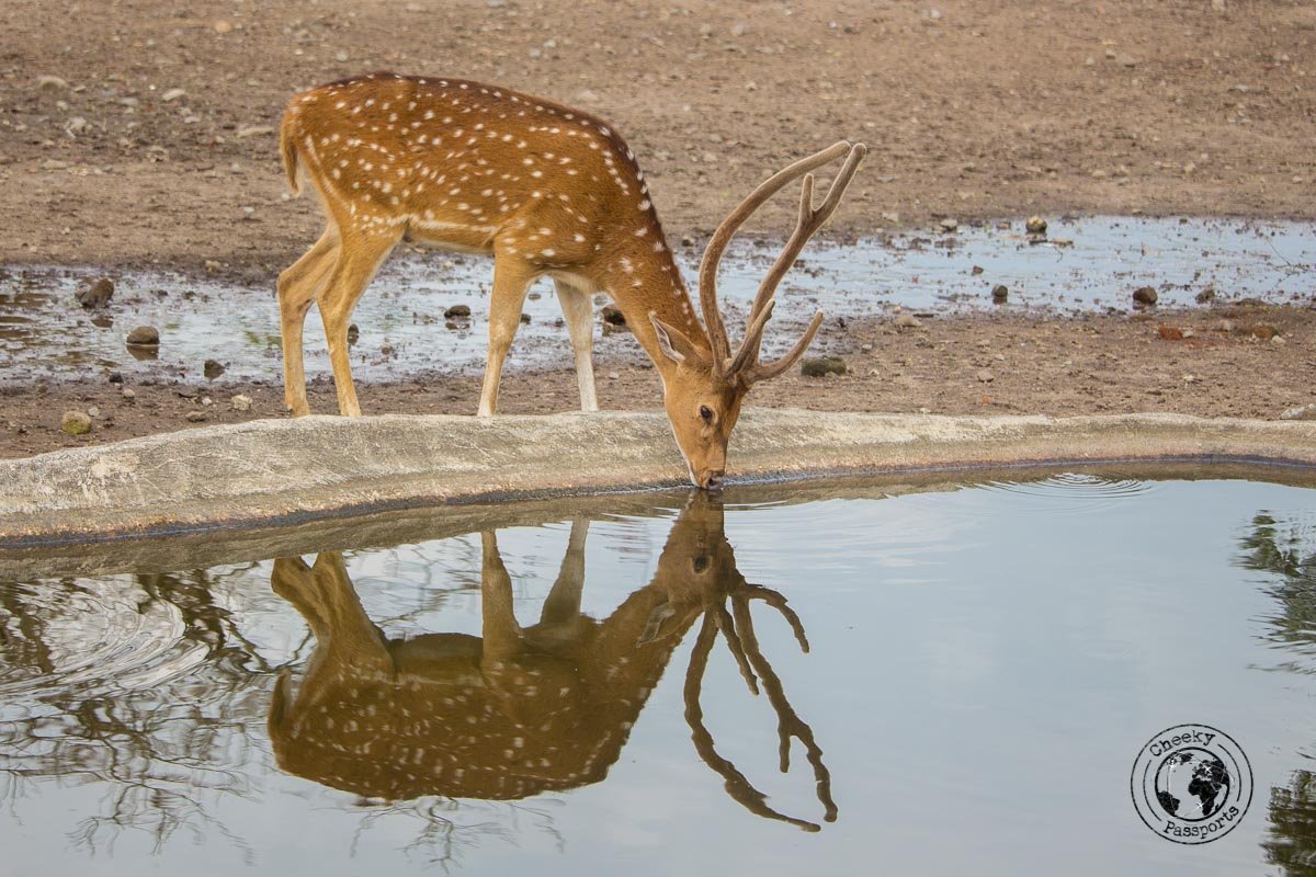 A deer reserve just of Parambanan temple - Places to visit and what to do in Yogyakarta