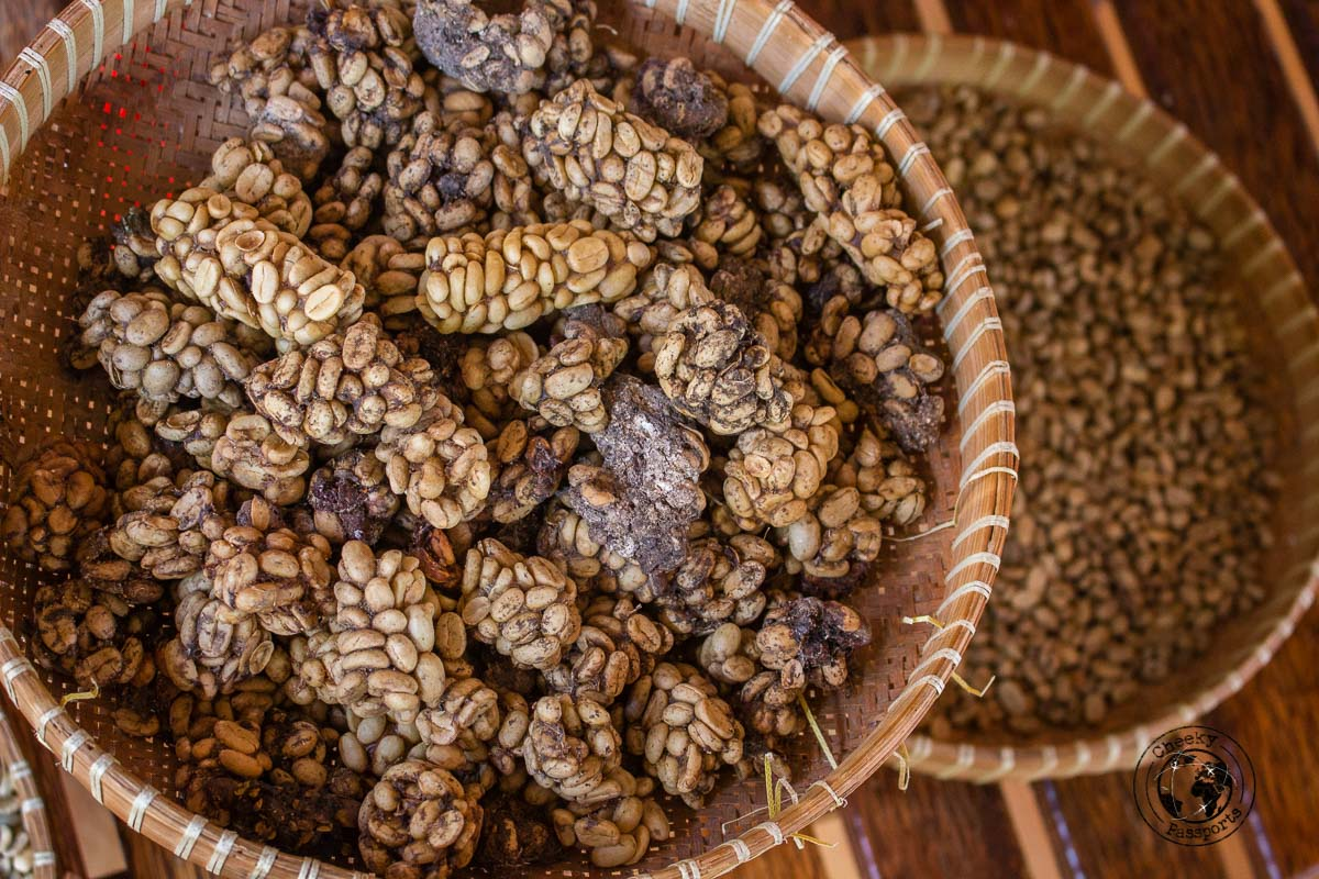 Kopi Luwak - Civet Coffee - things to do in Bukittinggi West Sumatra