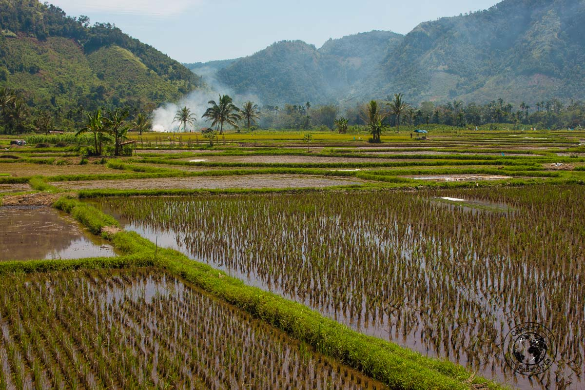 Rice fields at the Harau Valley - things to do in Bukittinggi West Sumatra