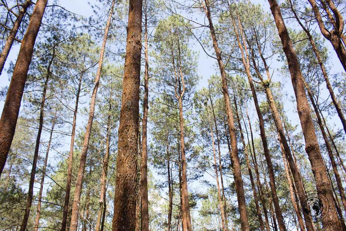 The woods - A Mini Guide to Bukittinggi West Sumatra