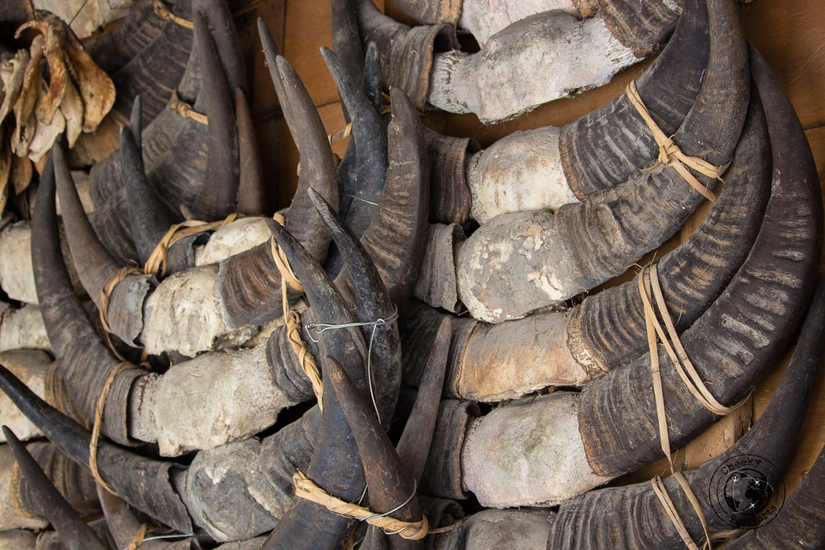 Buffalo skull remains - Things to do on Sumba Island Indonesia
