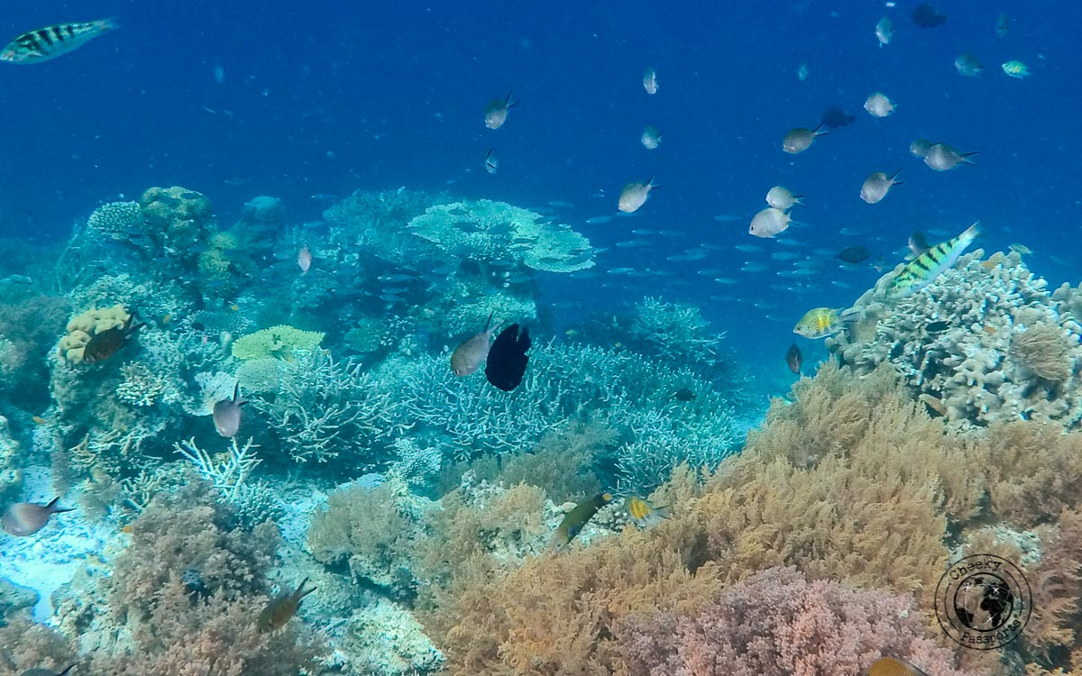 Coral formations - Diving with Diabetes