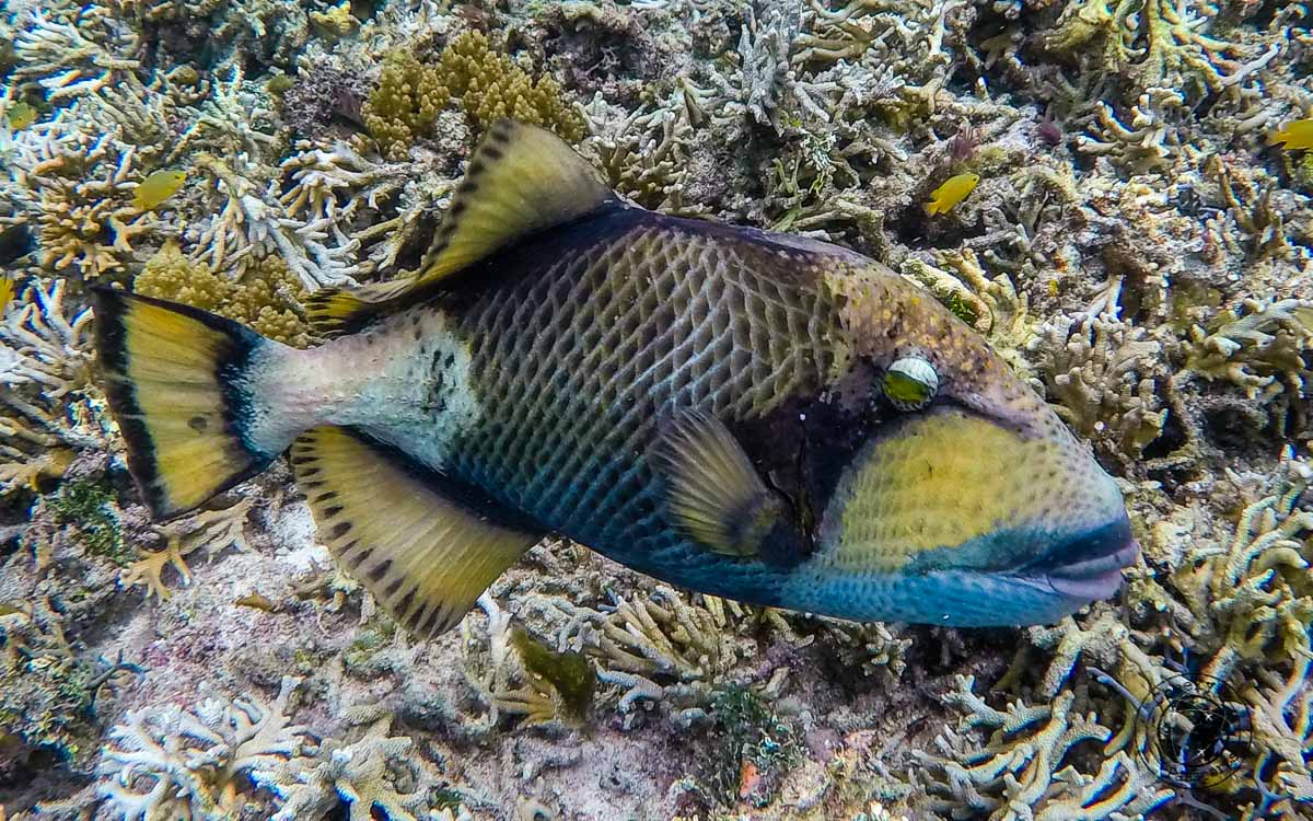 Exotic fish - Diving with Diabetes
