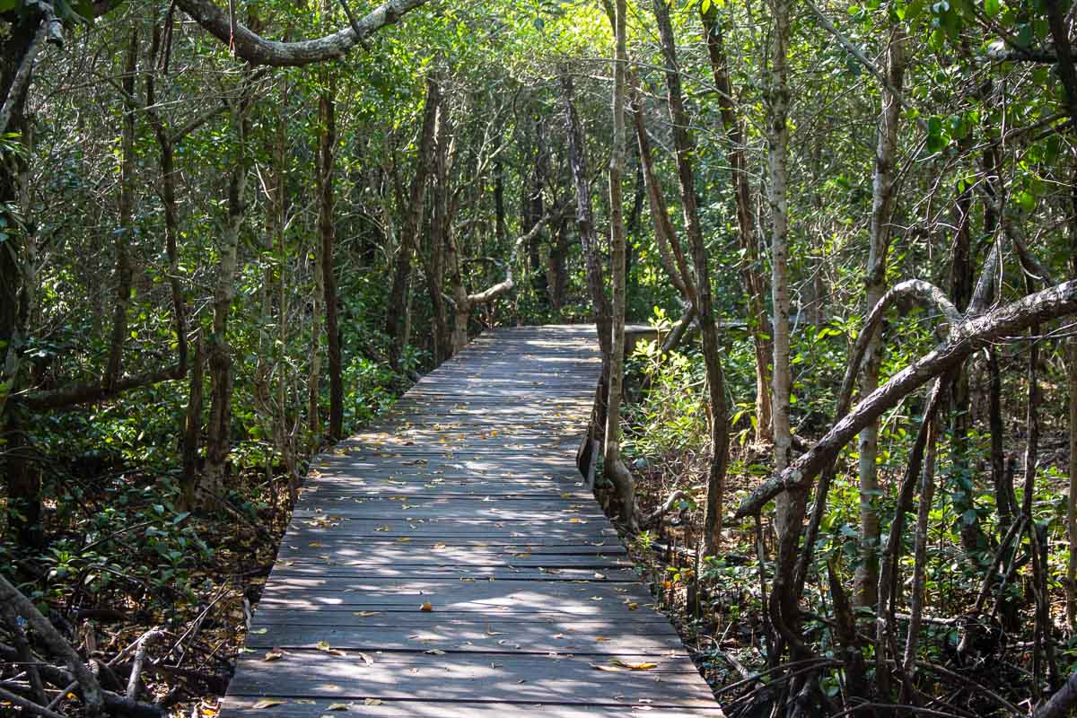 Mangrove forest - Karimunjawa Islands Travel Guide and Information