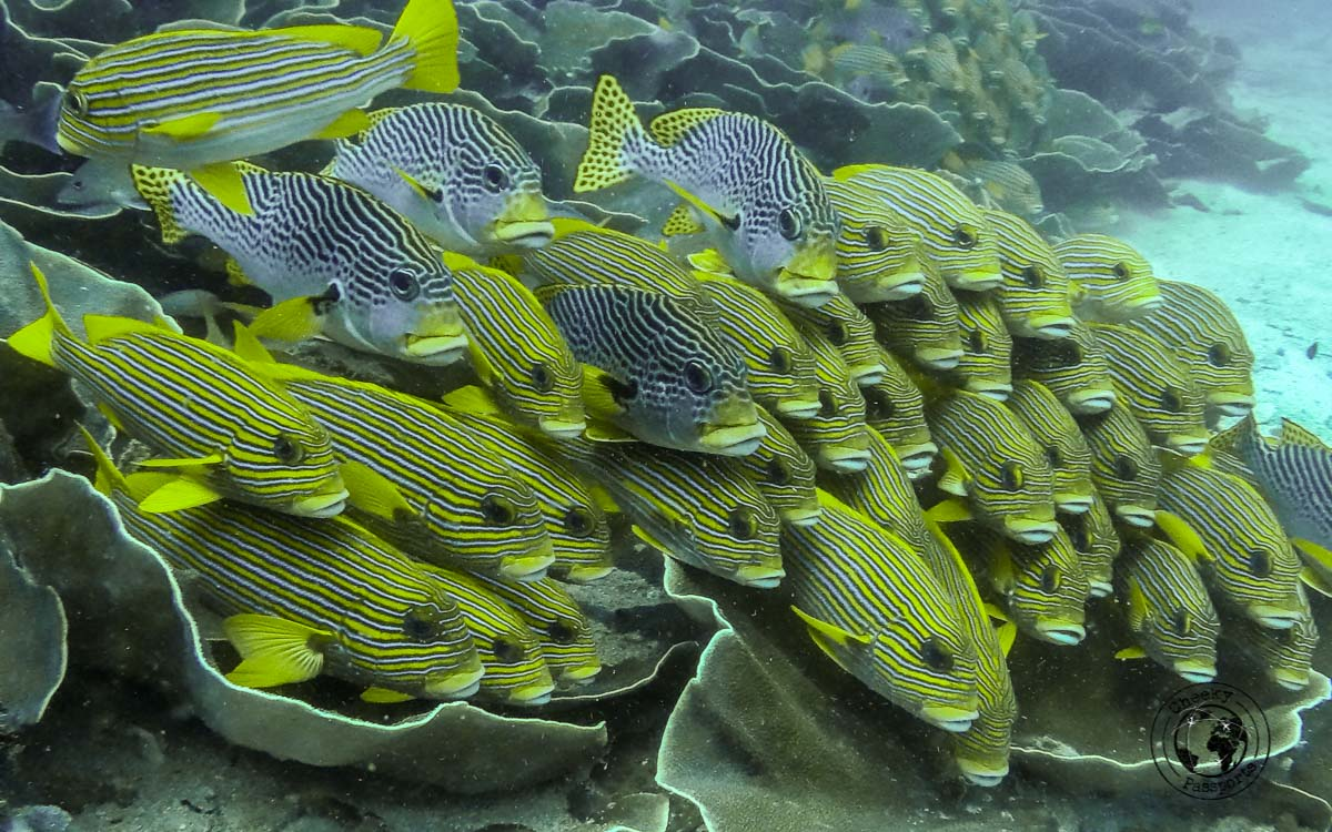 School of Fish posing for picture - Diving with Diabetes