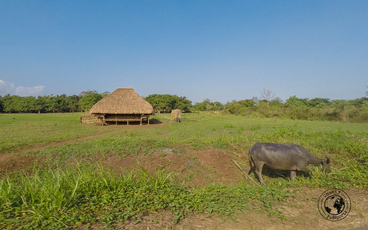 The landscape in Sumba - Things to do on Sumba Island Indonesia