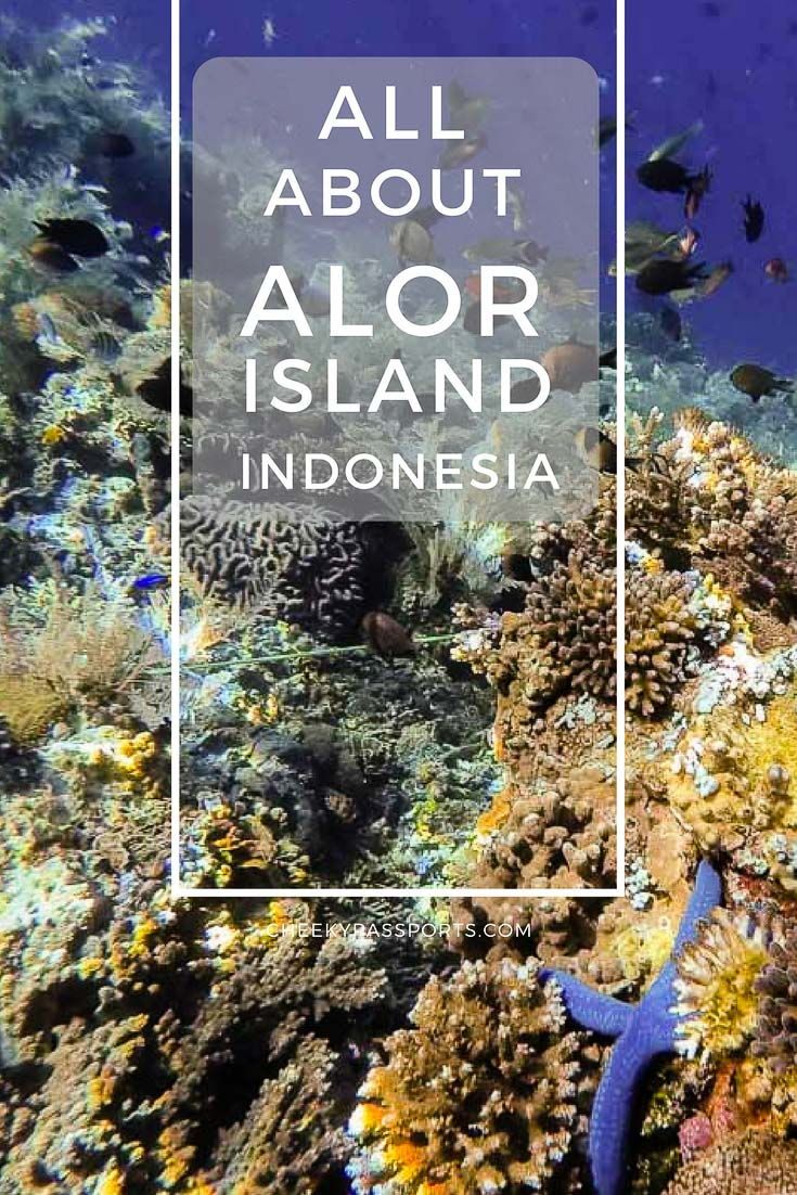 Alor Island, Indonesia is home to some of the best scuba diving experiences in all of Indonesia, as well as some gorgeous unspoilt beaches and fascinating raw scenery. Alor Island is home to the capital and main provincial city, Kalabahi, the only town in the region offering some facilities to the independent traveler. #alor #indonesia #travel #offthebeat #diving
