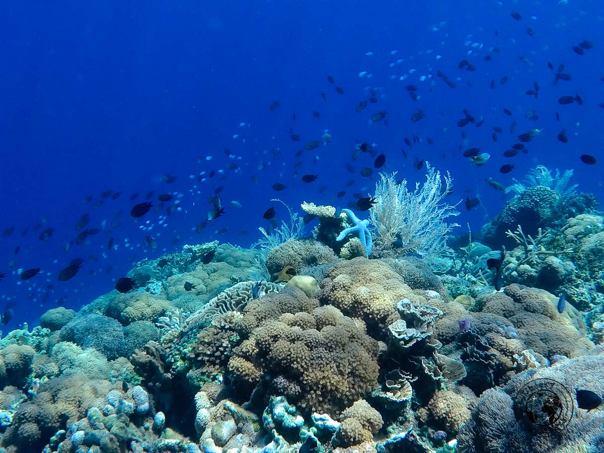 Alor Underwater - All About Alor Island, Indonesia
