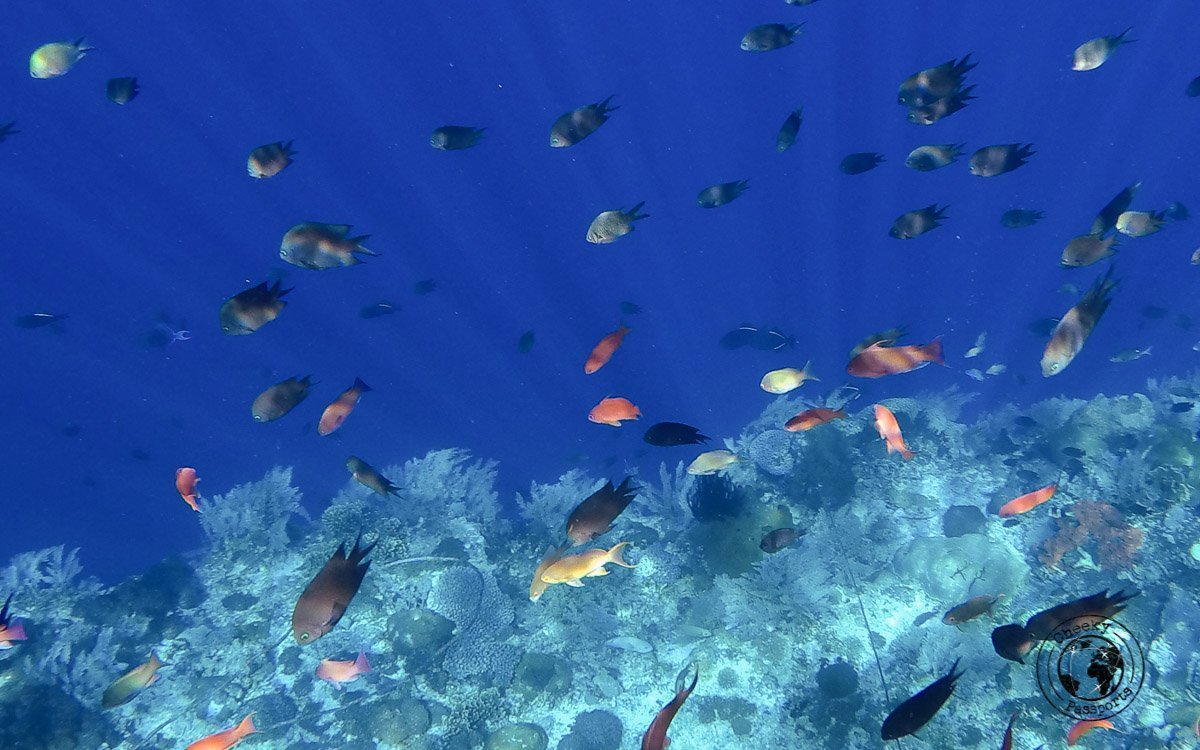 Alor Underwater Sea life - All About Alor Island, Indonesia