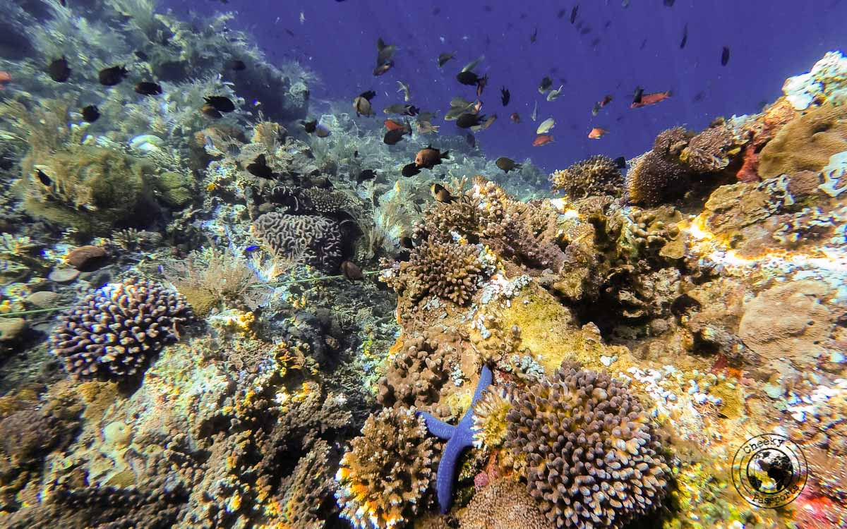 Alor island diving in Alor Island, Indonesia
