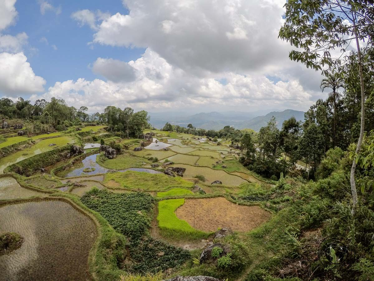 Batutumonga viewpoint of the rice terraces around the countryside of sulawesi