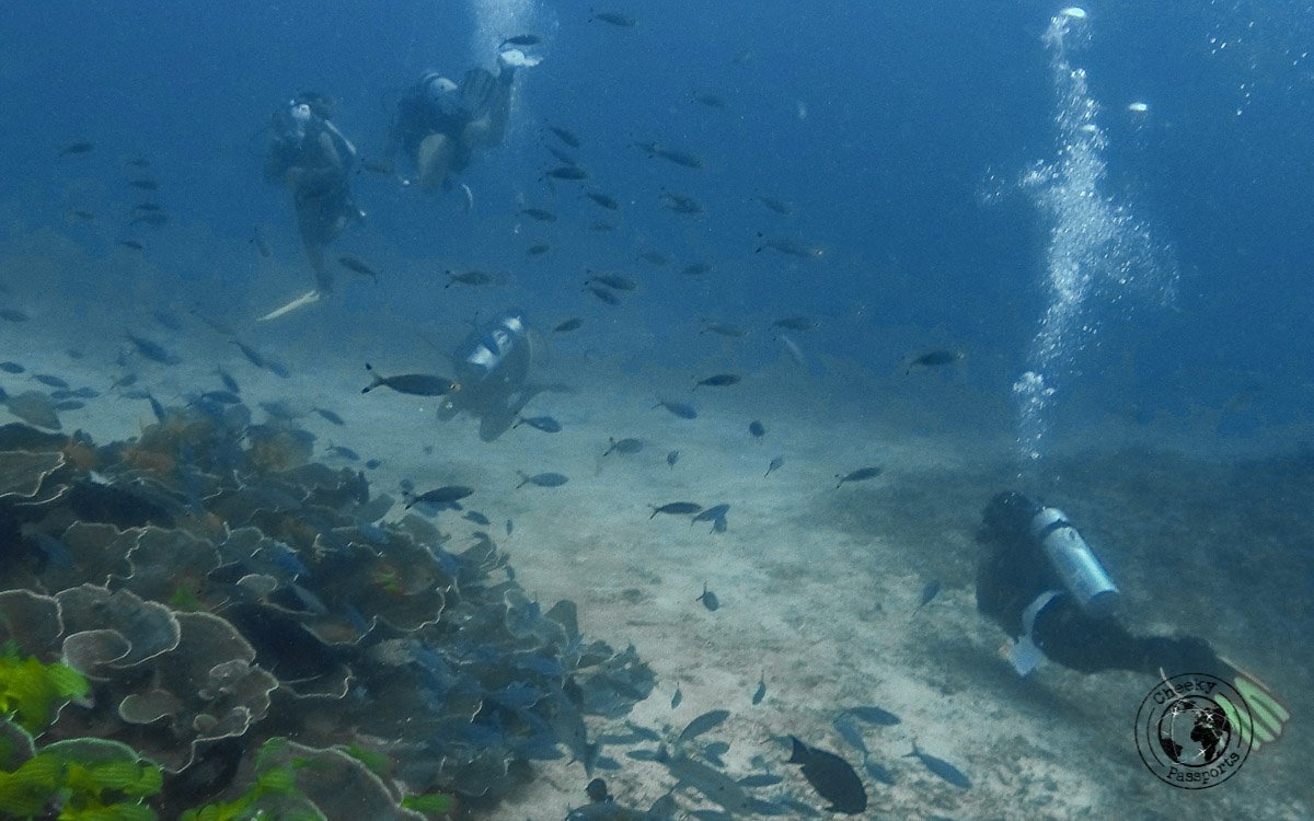 Diving in Raja Ampat is one of the best diving experiences possible