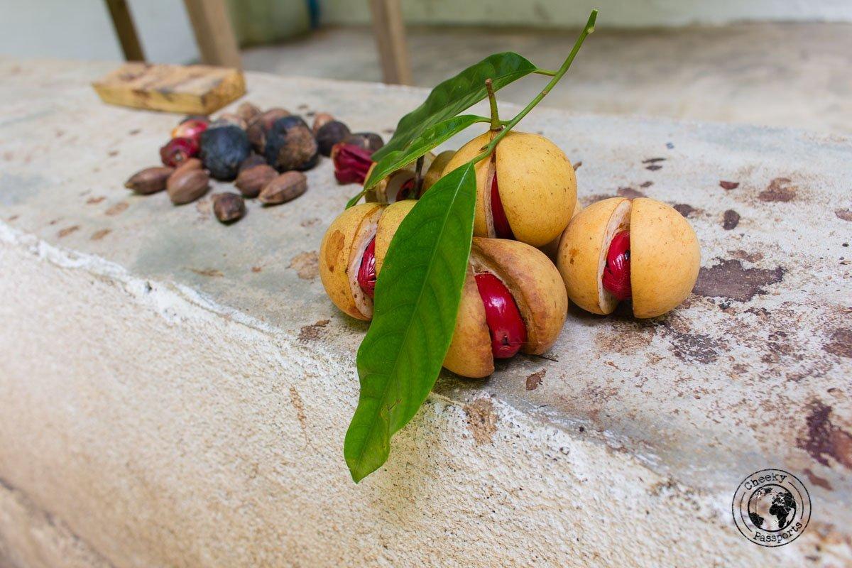 Nutmeg just off the tree - The view from the Cilu Bintang Estate in Bandaneira, Banda Islands, Maluku