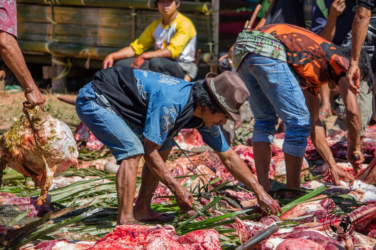 Sorting the different cuts of buffalo - a funeral in Tana Toraja, Indonesia