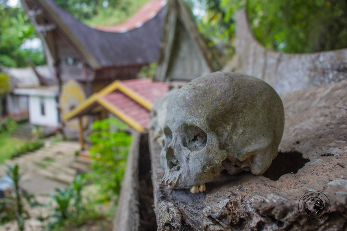 Skulls are a common view in Tana Toraja, Indonesia. This picture was taken on the hill at Katu Kese